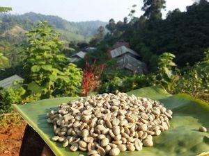 Koffiebonen uit Thainland