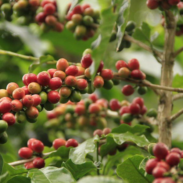 coffee-3911700_1280