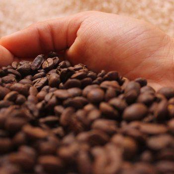 Thaise koffiebonen