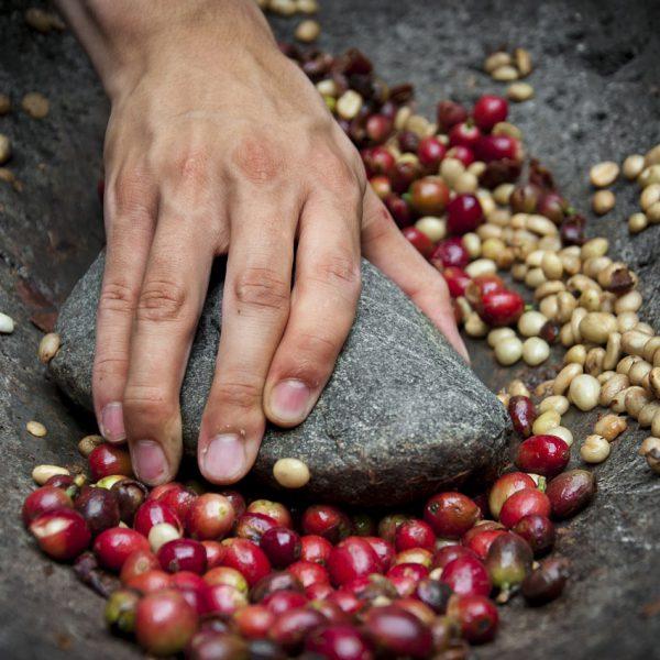 Bewerkingsproces Thaise koffiebonen